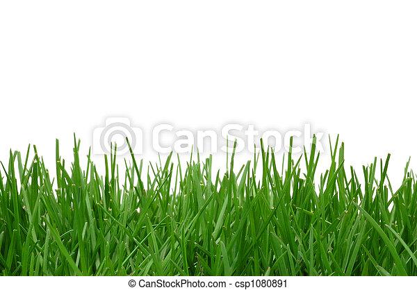 herbe, fond - csp1080891
