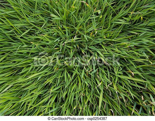 herbe - csp0254387