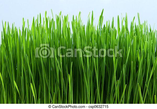 herbe - csp0632715