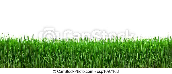 herbe - csp1097108