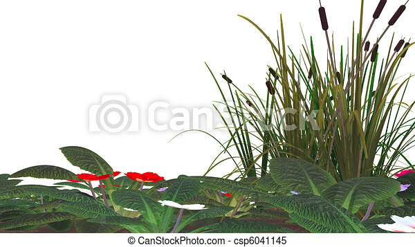 herbe, &, isolé, marais, fleurs, canne - csp6041145