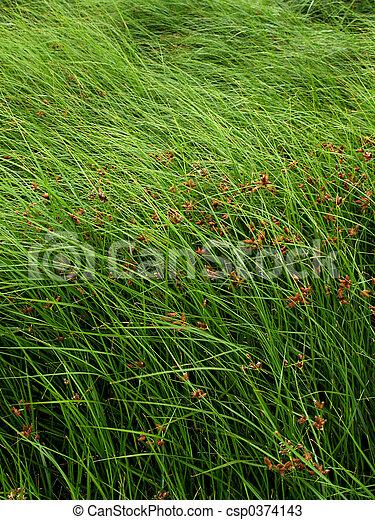 herbe, mer - csp0374143