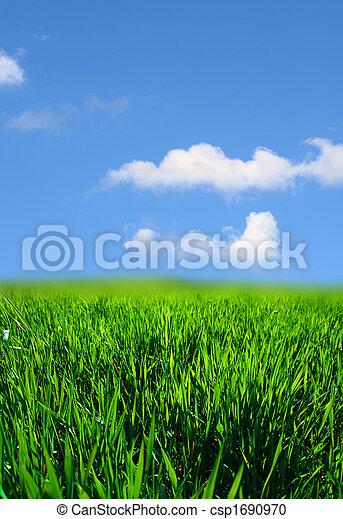 herbe, paysage vert - csp1690970