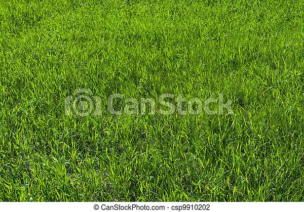 Herbe pelouse vert texture photo de stock rechercher for Pelouse tarif