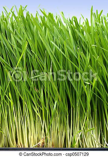 herbe - csp0507129
