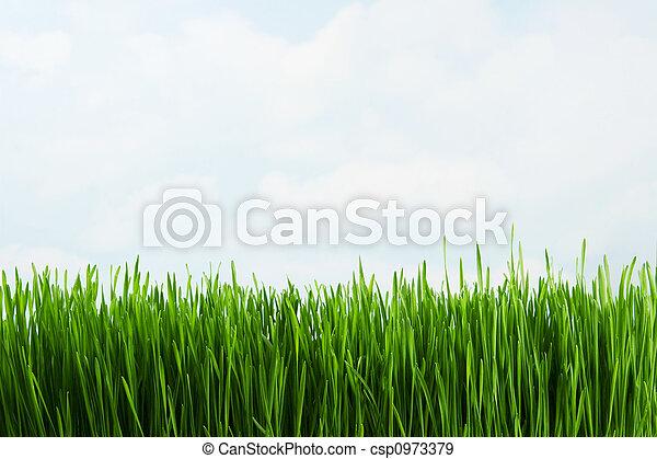 herbe - csp0973379