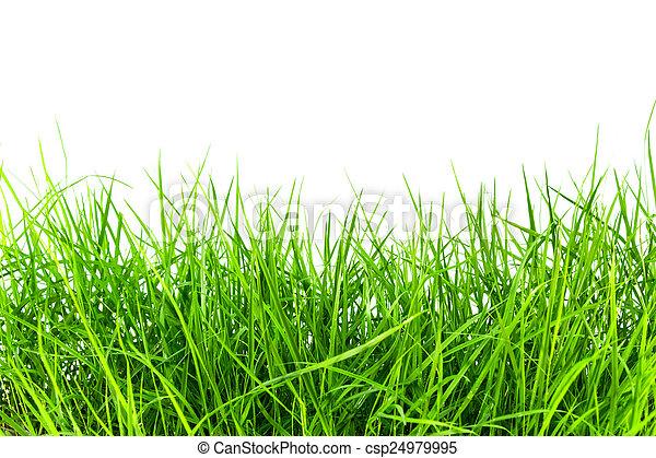 herbe - csp24979995