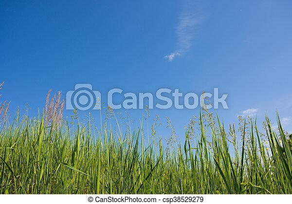 herbe, sky. - csp38529279