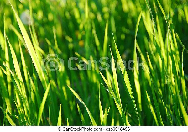 herbe, vert - csp0318496