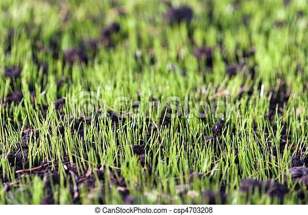herbe, vert - csp4703208