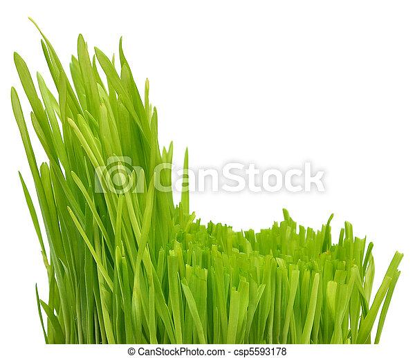 herbe, vert - csp5593178