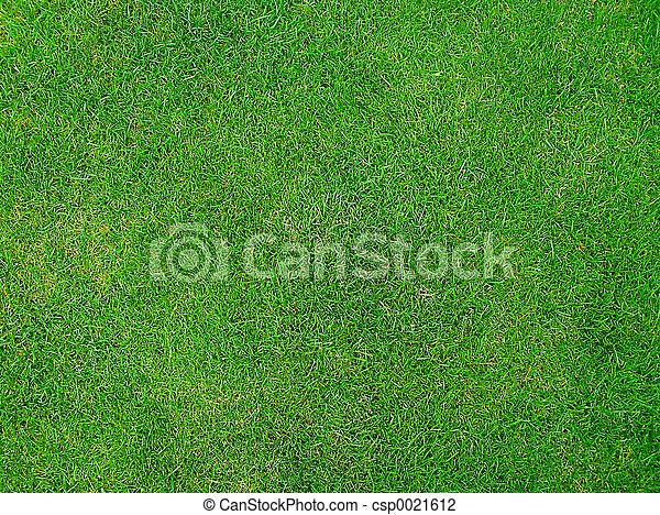 herbe, vert - csp0021612