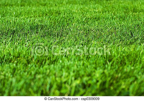 herbe, vert - csp0309009