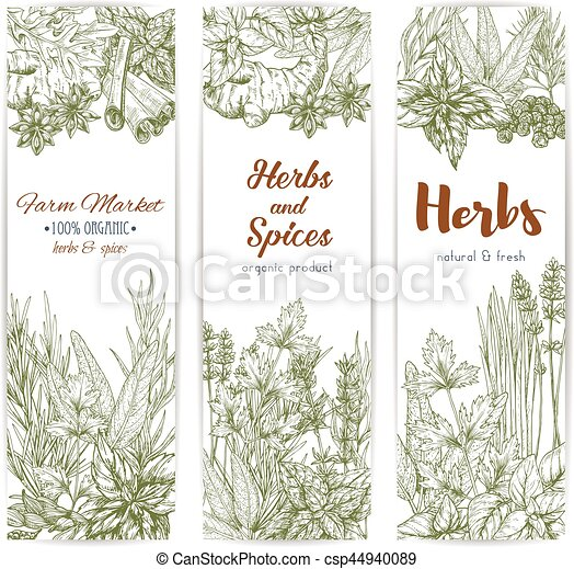 Herbs And Spices Sketch Vector Banners Herbs And Seasonings Sketch Vector Banners Set Of Spice Condiments Anise And Oregano