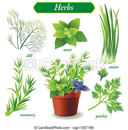 Herbs - csp11557166