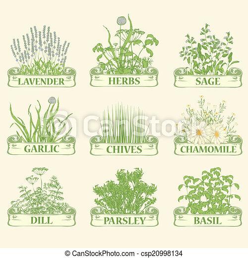 herbs - csp20998134