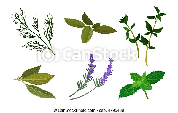Herbs For Kitchen Vector Set. Cooking Ingredient Collection - csp74795439