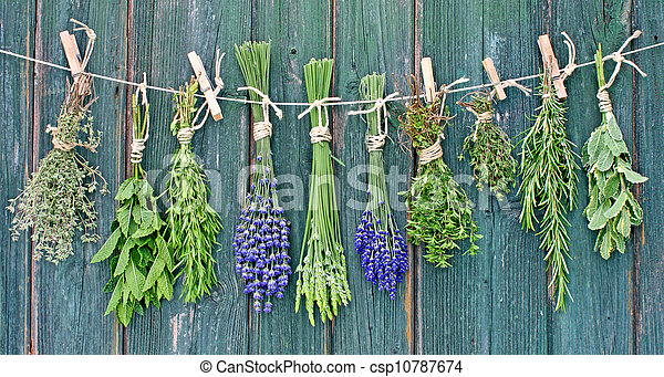 herbs - csp10787674