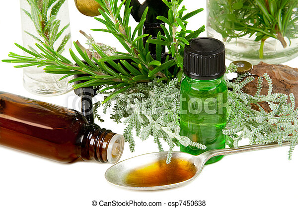 Herbs (Rosemary and santolina) for medicine on white background - csp7450638