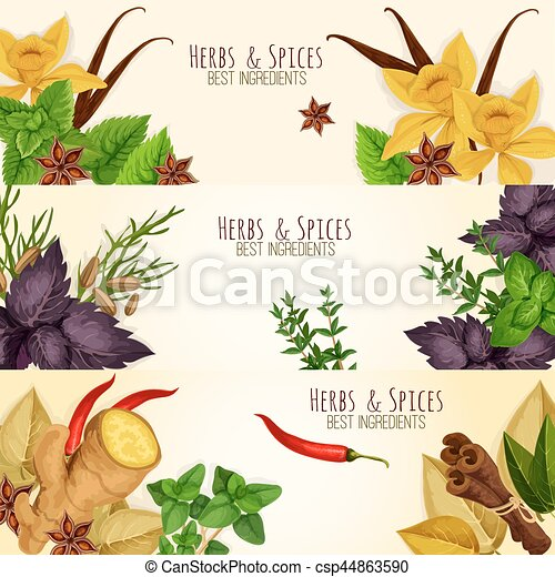 Herbs Spices Culinary Ingredients Vector Banners Spicy Aromatic Herbs Herbal Seasonings And Spice Condiments Vector