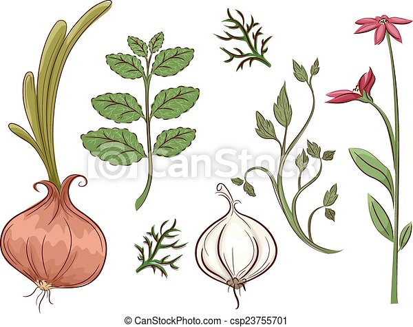 Herbs Illustration featuring different types of herbs vector