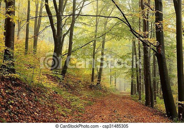 Autumn-deciduous Forest - csp31485305