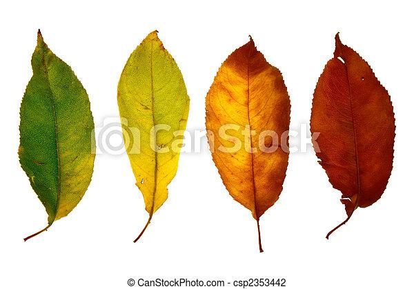 Herbstblatt isoliert - csp2353442