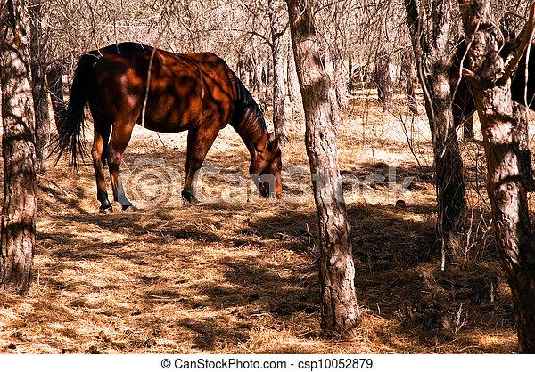 herbst, dunkel, pferd - csp10052879