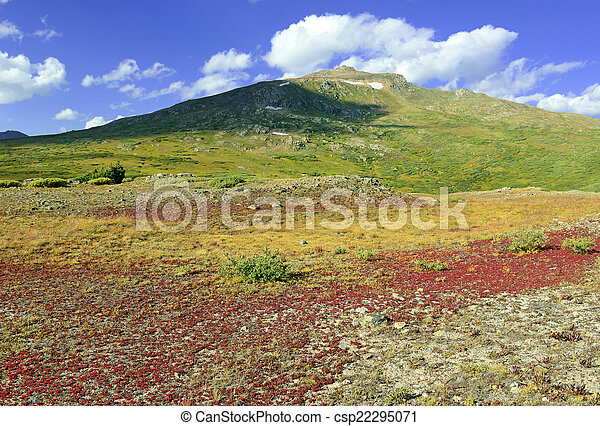 Alpine Tundra in Herbstfarben - csp22295071