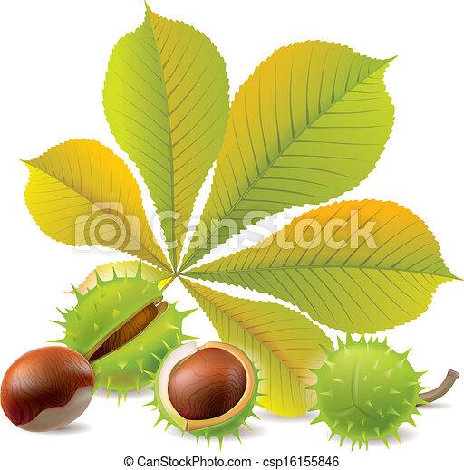 Herbst Kastanien Eps10 Chestnuts Enthält Herbst Objects