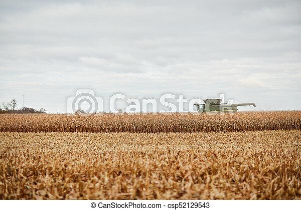 wann wird mais geerntet