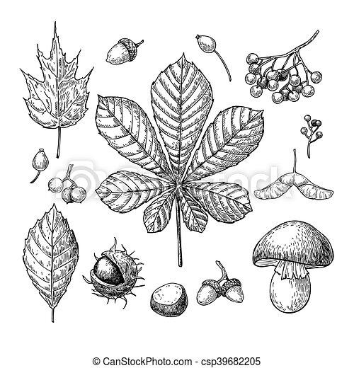 Herbst Satz Mushroo Kastanien Blätter Beeren Nüsse Vektor