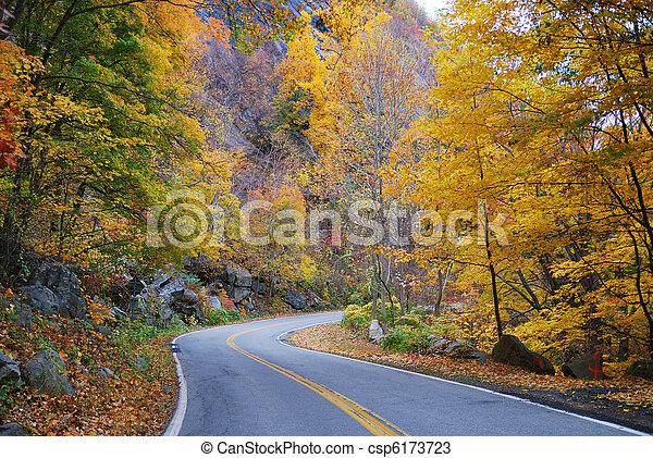 herbst, wälder, laub, straße - csp6173723