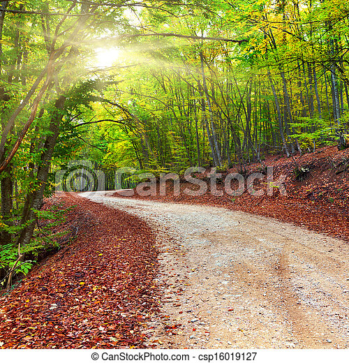 Im Herbstwald - csp16019127