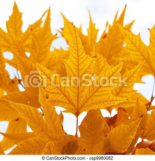 Herbstblätter. - csp9980082