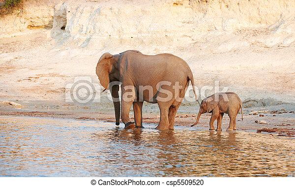 Herd of African elephants - csp5509520
