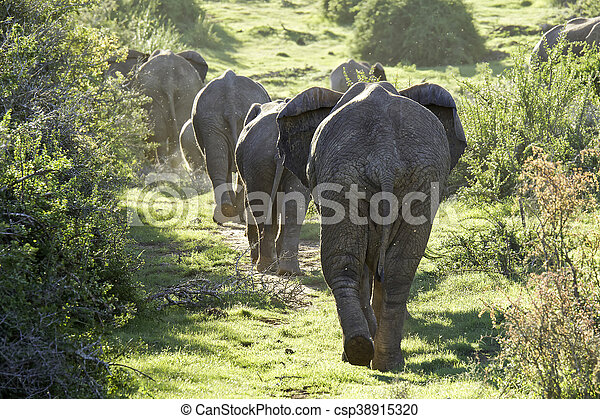 Herd of elephants walking up a hill - csp38915320