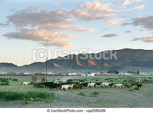 Herd of goats - csp2585286