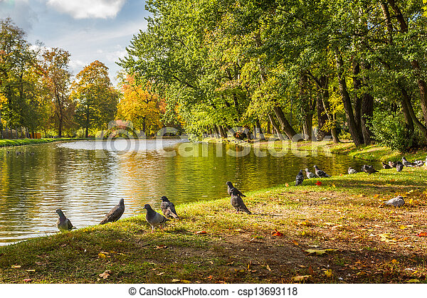 Herd of pigeons on autumn river in the park - csp13693118