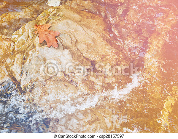 herfst, eik, steen, blad - csp28157597