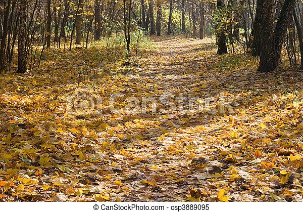 herfst, park - csp3889095