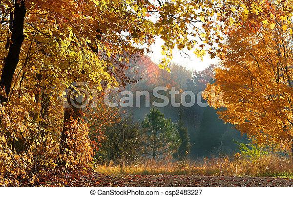 herfst, scène, mooi - csp2483227