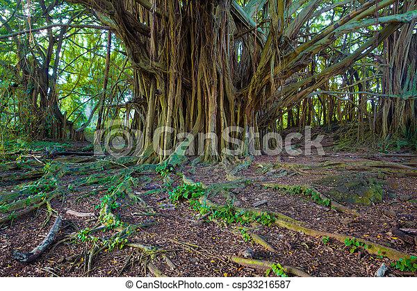 Hermoso árbol baniano - csp33216587