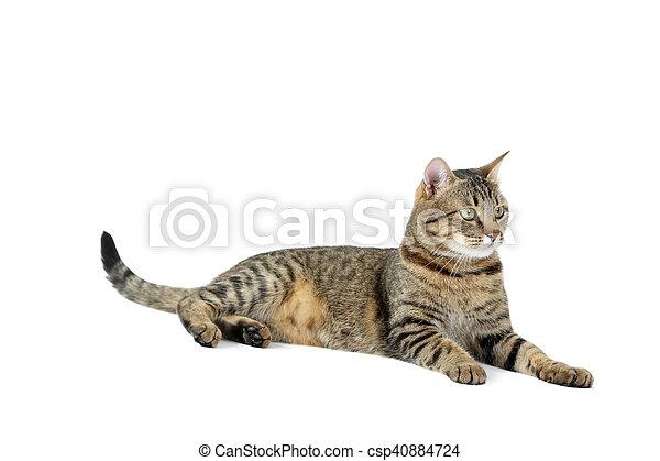 Hermoso gato aislado en un blanco, cerca - csp40884724
