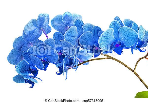 Fondo Azul Brillante De La Flor Imagenes De Archivo