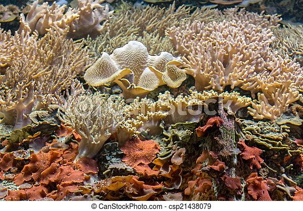Hermoso arrecife de coral - csp21438079