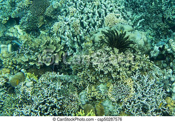 hermoso, barrera coralina - csp50287576
