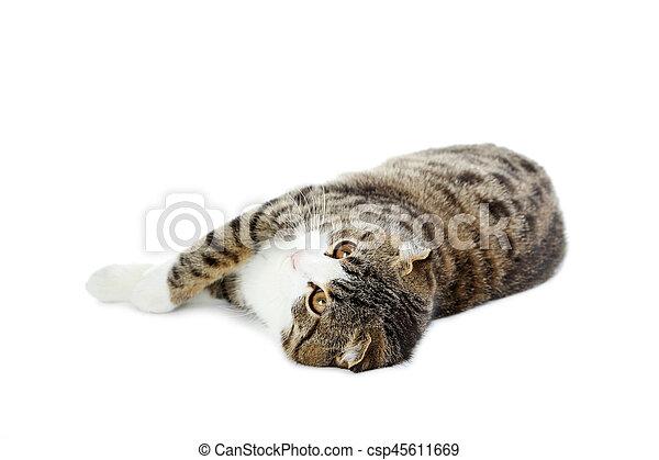 Hermoso gato aislado en un blanco - csp45611669