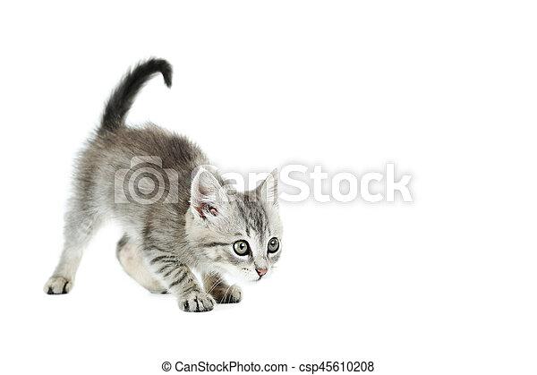 Hermoso gato aislado en el fondo blanco - csp45610208