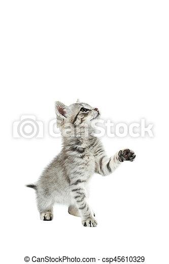 Hermoso gato aislado en el fondo blanco - csp45610329